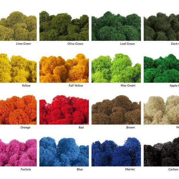 Mech chrobotek - kolory