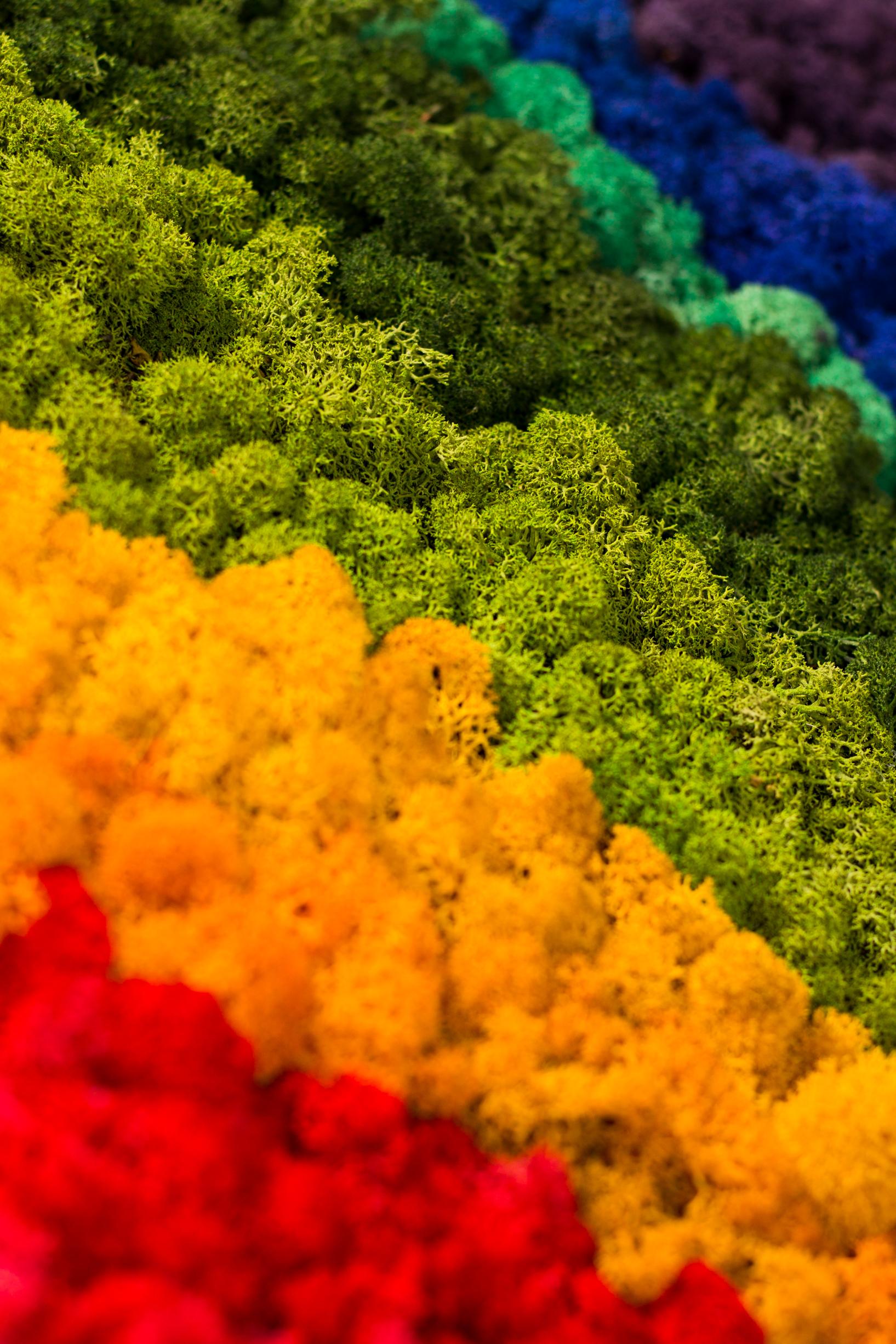 Chrobotek reniferowy kolory