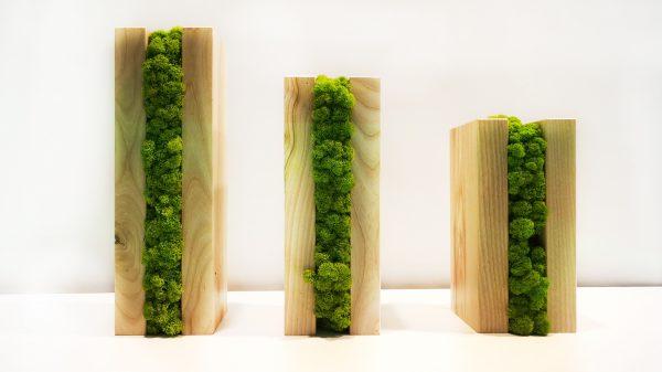 Drewniane słupki z mchem