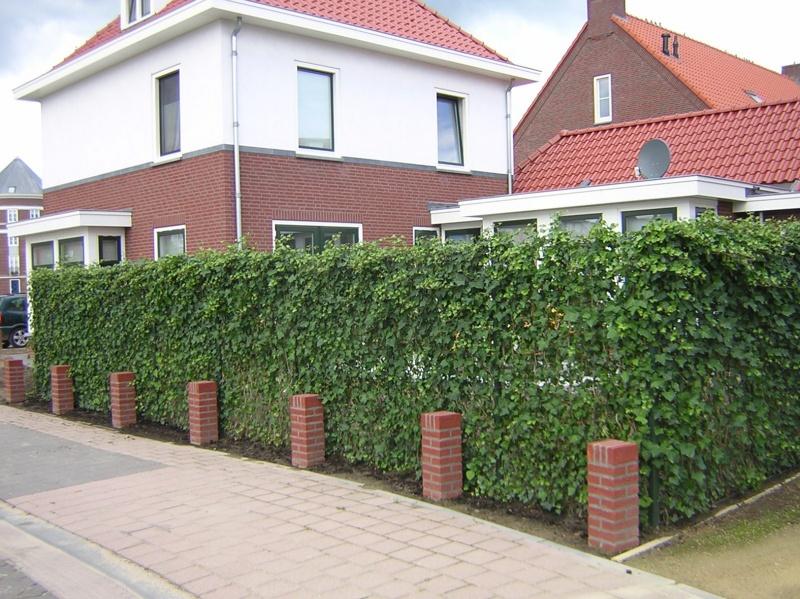 Zielone ekrany ogrodzenie